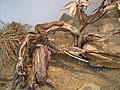 Snake (117526094).jpg