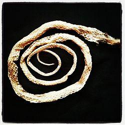 Snake skin coil.jpg