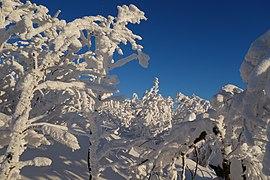 Sninský kameň (v zime) 044.jpg