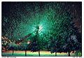 Snow -)) - panoramio.jpg