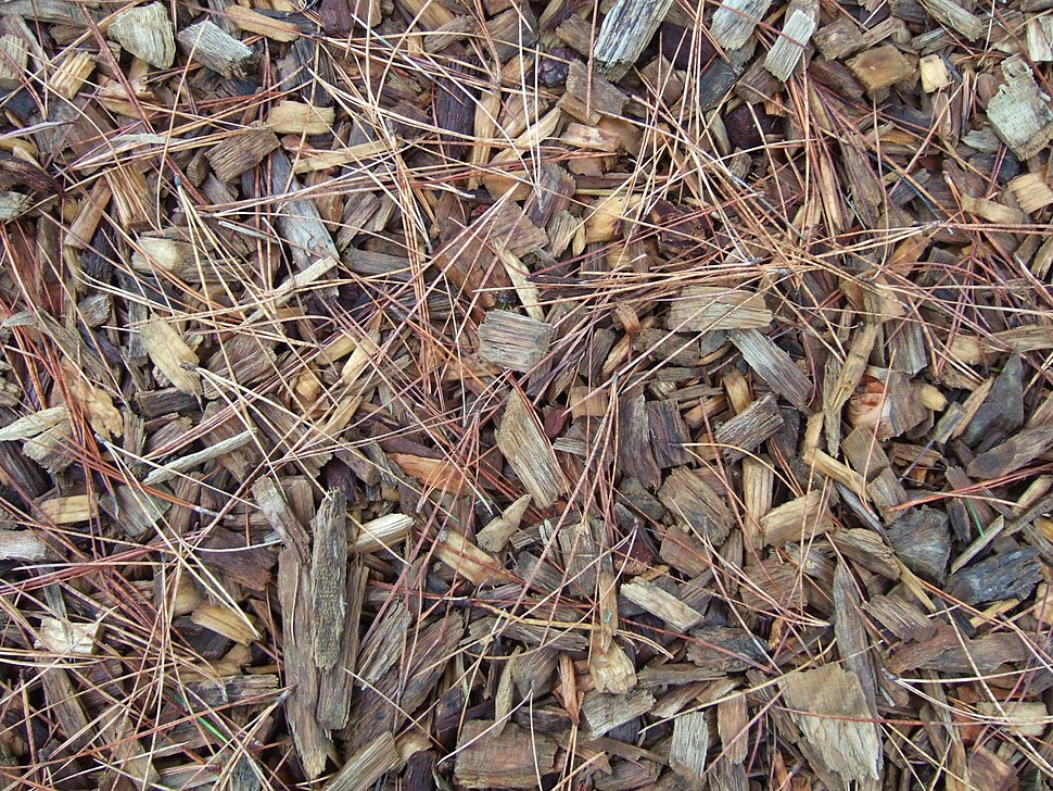 Soil improvement and protection - wood chip mulch at Wisley