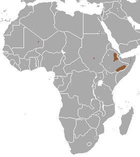 Somali Shrew area.png