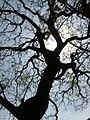 Sombra de un árbol en CCH..JPG