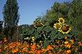 Somewhere Between Summer And Autumn 3 (125017781).jpeg