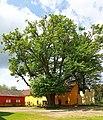 Sommerlinde im Schlosshof Engelstein Pano 2015-05 NDM GD-114.jpg