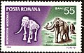 Southern-Elephant-Archidiskondon-meridionalis.jpg