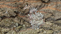 Spring lichens 06.png