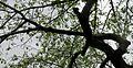 Springtree1.jpg