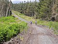 St Oswald's Way in Harwood Forest - geograph.org.uk - 1412773.jpg
