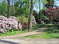 Stadtpark Hamburg im Mai 3.NNW.jpg