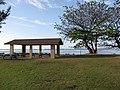 Starr-130320-3513-Terminalia catappa-habit with Pavillion-Anini Beach-Kauai (24578628414).jpg