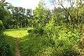 Steenbergse bossen 35.jpg