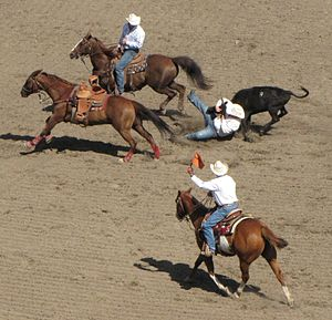 English: Straws Milan Steer wrestling at the C...