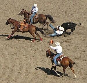 Calgary Stampede - Image: Steerwrestling c 01