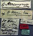 Stereomyrmex horni casent0101264 label 1.jpg