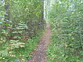 Stien rundt Petersøya.JPG