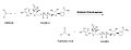 Stoichiometry of ALDH3A1 aldehyde metabolism.jpg