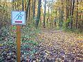 Szreniawa forest.jpg