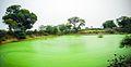 Tadai Common water body in village.jpg