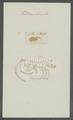 Talitrus locusta - - Print - Iconographia Zoologica - Special Collections University of Amsterdam - UBAINV0274 098 01 0005.tif