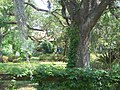 Tallahassee FL Roberts Farm HD01.jpg