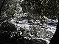 Taman Negara National Park 20190711 105617.jpg