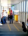 Tasmania Fruit Detector Dog.jpg