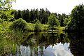 Teich im Naturschutzgebiet in der Wasserdell bei Dahlem.jpg