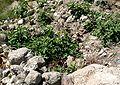 Tell Megiddo - 4.2006 -21.JPG