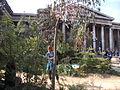 Temporary Australian garden outside the British Museum 204.JPG