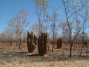 Termite mounds near Pine Creek NT