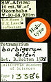 Tetramorium barbigerum castype13386 label 1.jpg