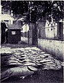 "The Fish Market - A Good Catch of ""Bonitos"", MON 1909.jpg"