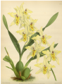 The Orchid Album-01-0131-0043.png