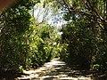 The beaten path - panoramio.jpg