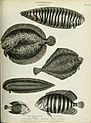 The cyclopaedia; or, Universal dictionary of arts, sciences, and literature. Plates (1820) (20821581345).jpg