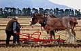 The ploughing match (19695121872).jpg