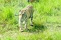 The roar of Safari Park.jpg