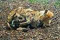 Thoiry Zoo, France 26-10-17-1561 (38189768561).jpg