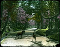 Three deer standing on road in (cemetery) garden; large flowering cherry trees, evergreens and stone monuments. (19761937498).jpg