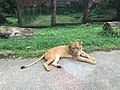 Tiger TSII.jpg