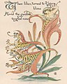 "Tiger lilies art from ""Flora's Feast"" - The art of Walter Grane (page 173 crop).jpg"