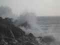 TomCorser Wild Sea Cot Valley Conwall IMG 5559.JPG