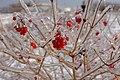 Toronto, Dec 27th, 2013 (11623182443) (2).jpg