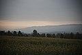 Totenåsen Skyline sett fra Tømmerholshøgda 28-08-19.jpg