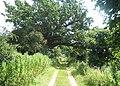 Track east of Martlesham Hall - geograph.org.uk - 895959.jpg