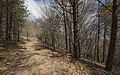 Trail in Haut-Languedoc, Rosis cf01.jpg