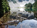 Trees in Snow Lake in mid August, 2014. (61be5384a298467eb1d96649b6774366).JPG
