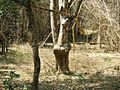 Trekking @ Wayanad wildlife Sanctuary - panoramio (9).jpg