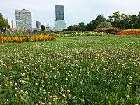 Trifolium fragiferum (subsp. fragiferum) sl23.jpg